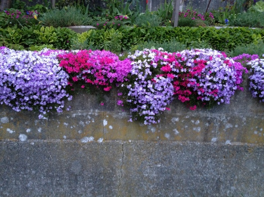Seen on East 10th. Flowers trailing over stone or concrete fences - love that..