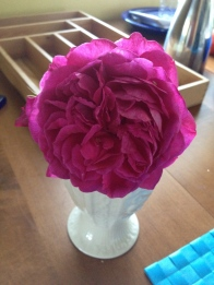 First cut blossom from the first rose I've ever grown: Young Lycidas from David Austin. So glad I bought it.