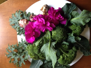 Kale and broccoli from my garden plots